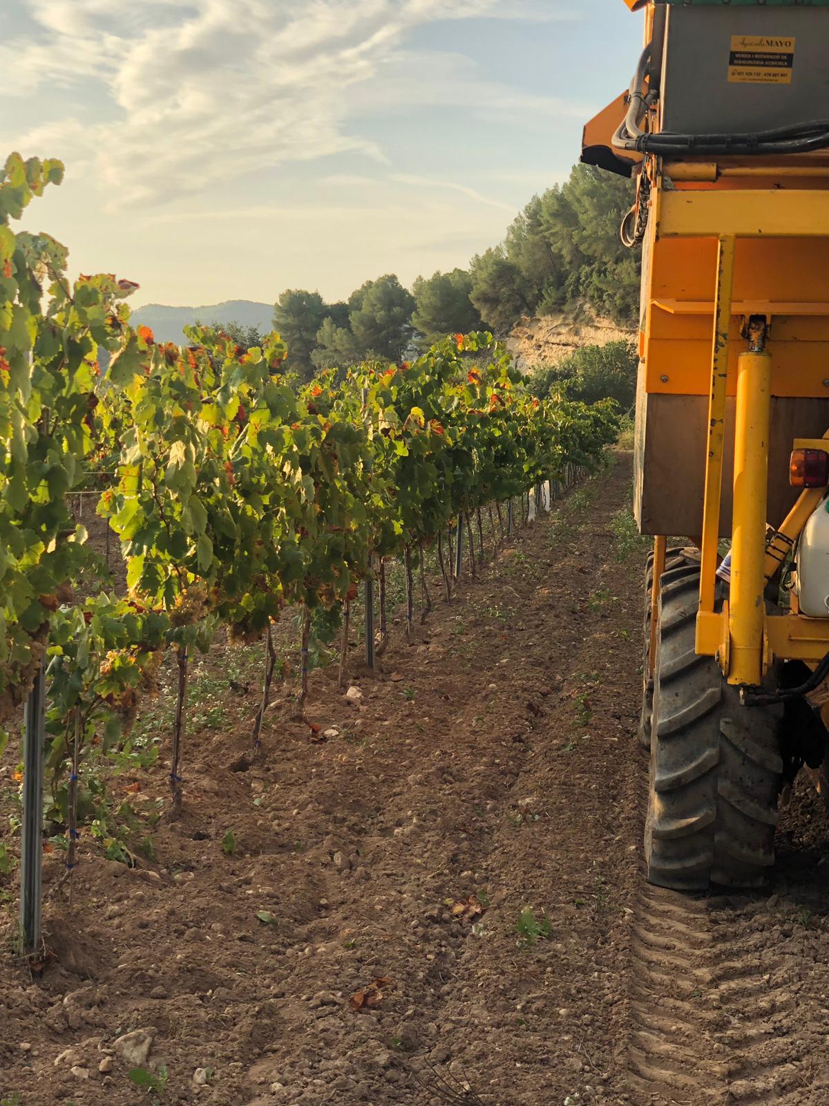 2020 harvest in Ferré i Catasús